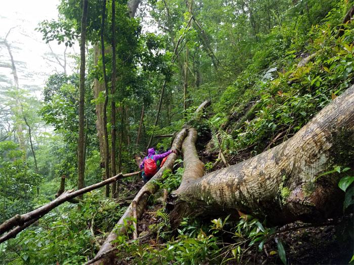 Waikane Trail