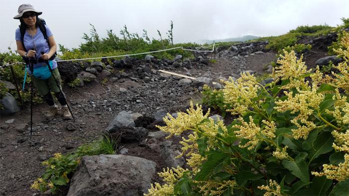 Volcanic flora