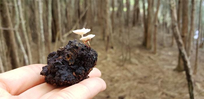 Fungi #3