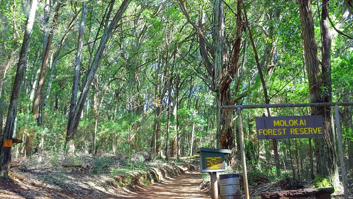 Molokai Forest Reserve