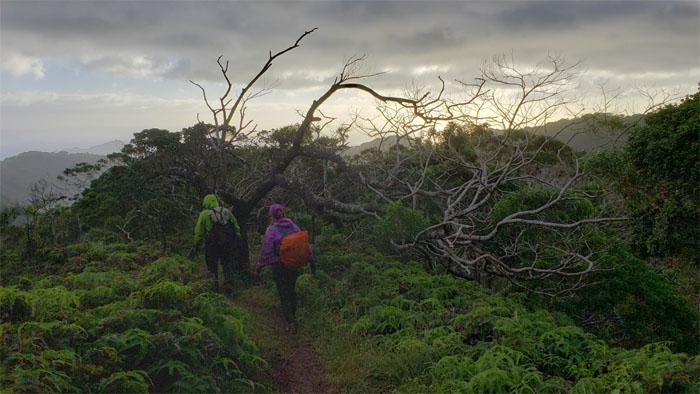 Ka'au Crater Trail