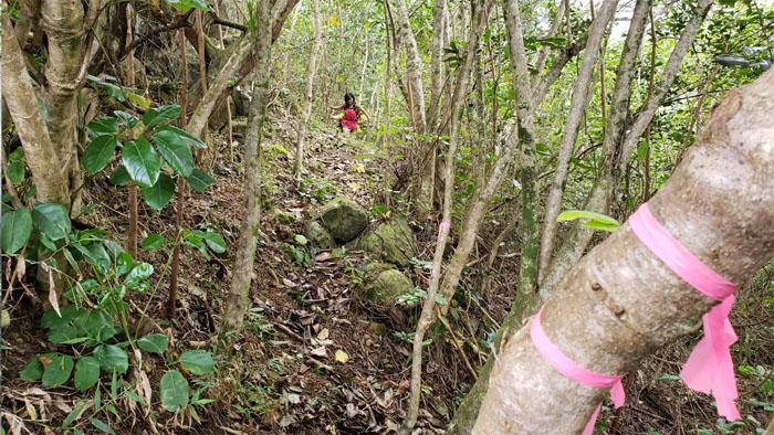 Contour trail