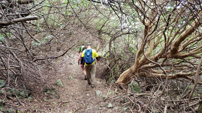 Ma'akua Loop Trail
