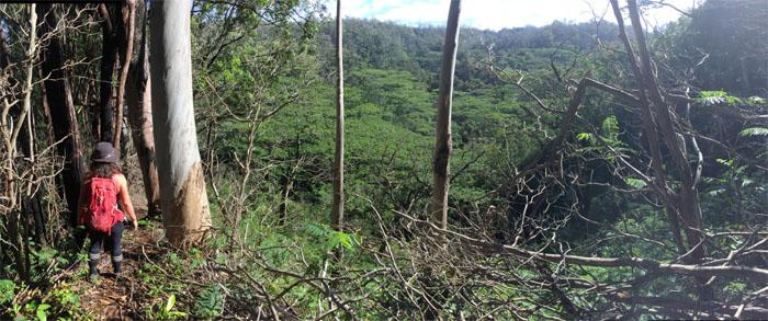 Ewa Forest Reserve
