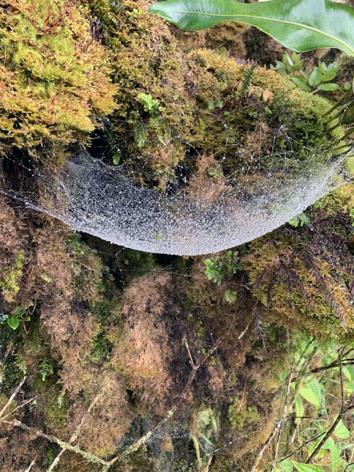 Bowman Bog