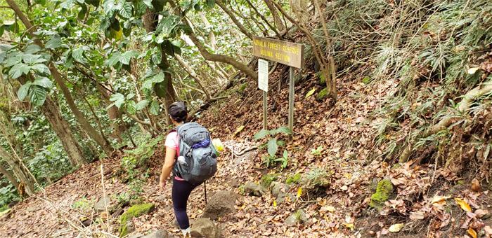 Kohala Forest Reserve