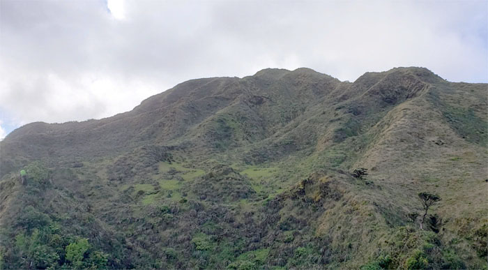 Waimalu Meadows
