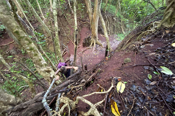 Maunawili Ditch Trail