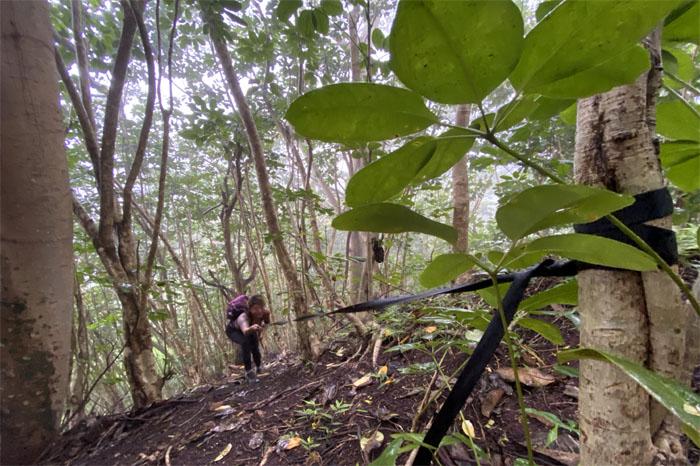 Aniani Nui Ridge Trail