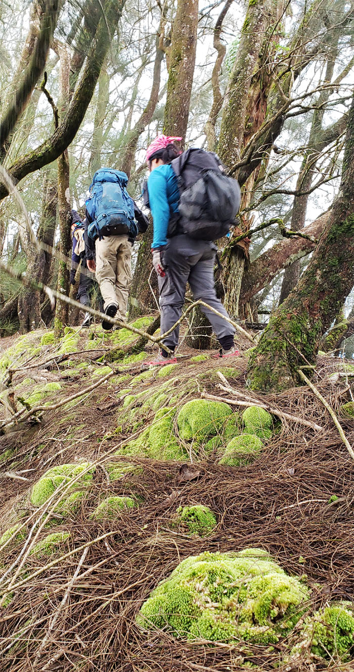 Bonsai Trail