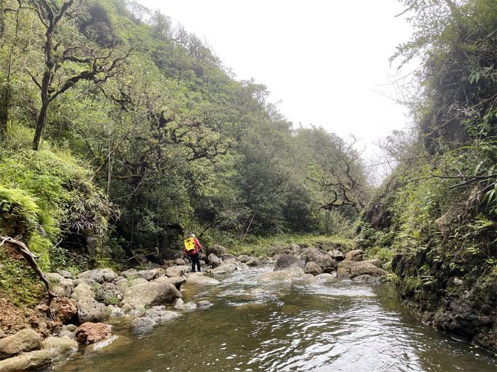 Kaluanui Stream