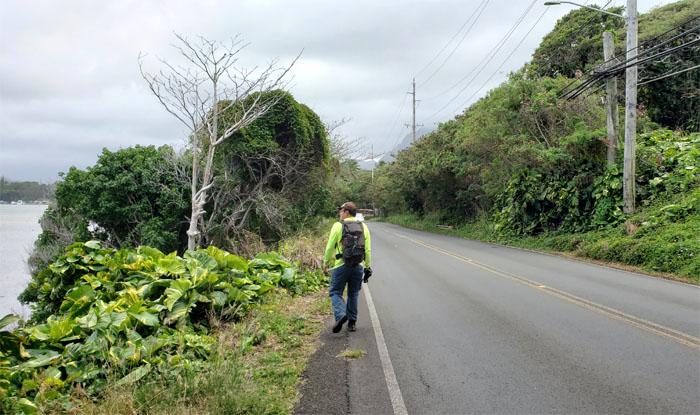 Kamehameha Hwy
