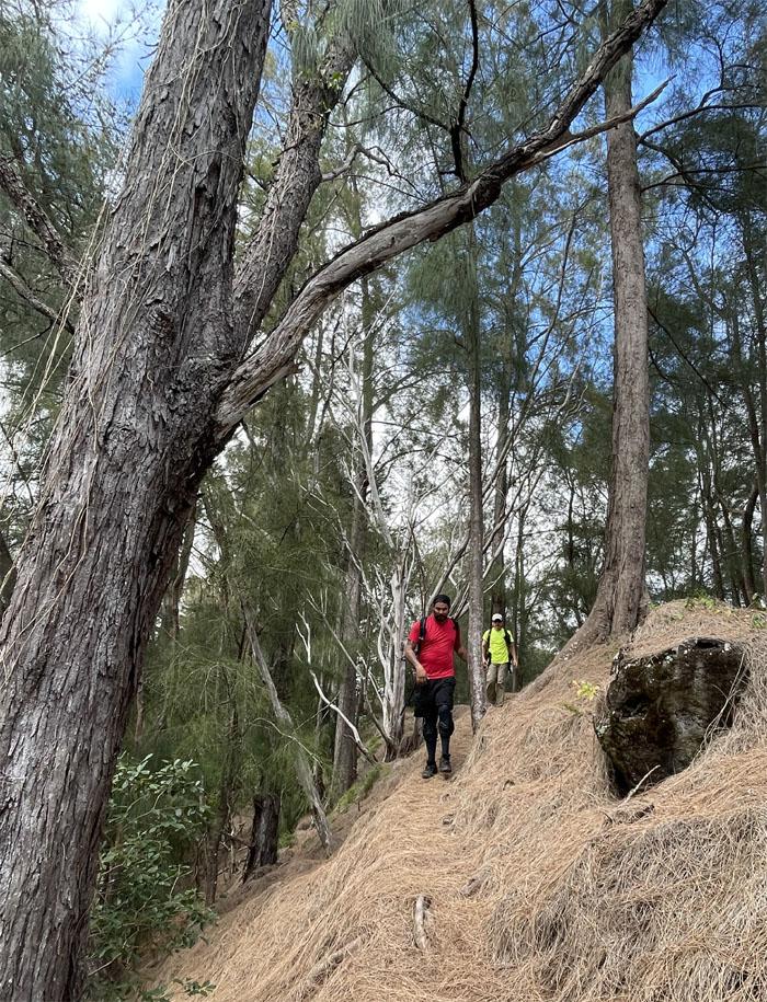 Kapalama Trail