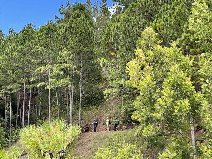 Kuaokala Trail